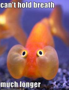 funny-pictures-this-fish-is-holding-his-breath