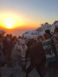 Donkeys climbing a hill at sunset in Santorini