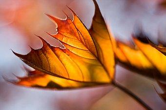 autumn_pendown