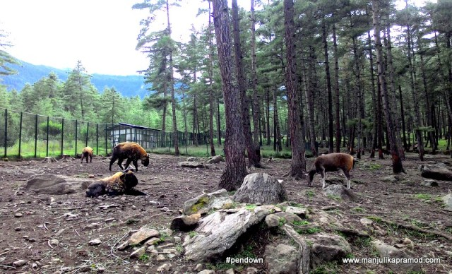Takin, National animal of Bhutan