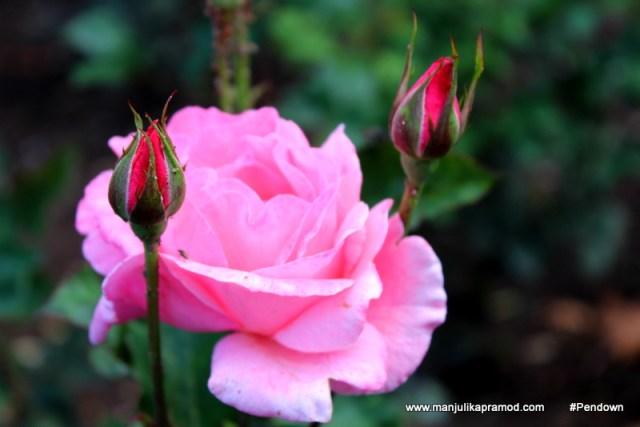 Flower Postcards from BHUTAN (5)