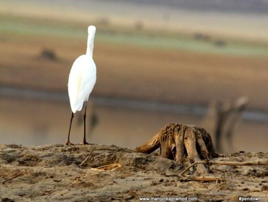 Kabini river, Karnataka, Birding