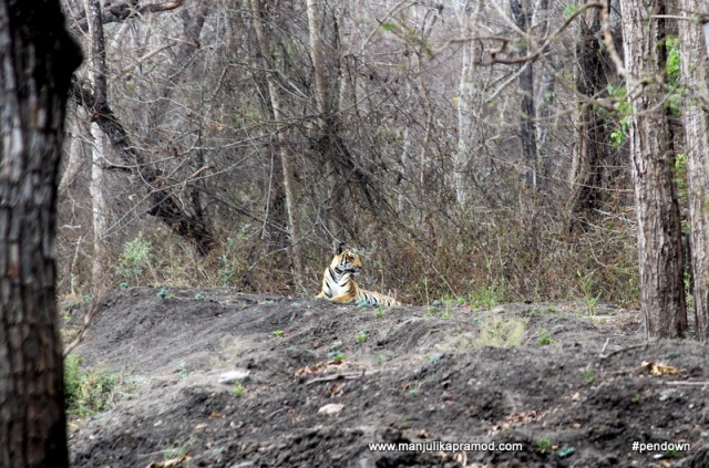 Tigress that we spotted in Kabini