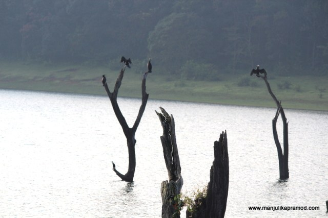 Birds in Periyar