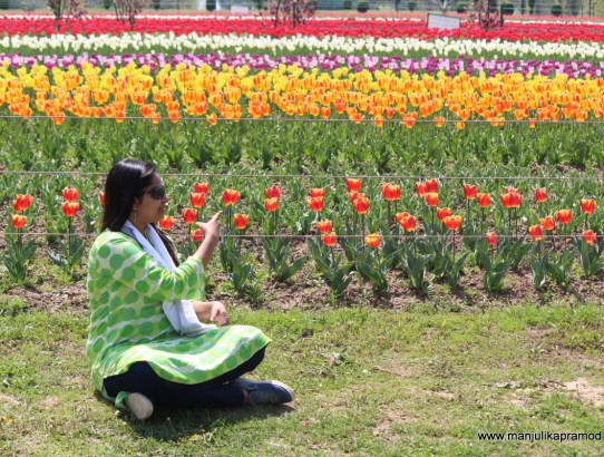 When I attended Tulip festival 2017