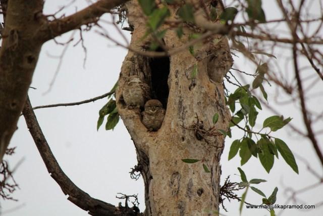 Morning Nature Walk, Bird watching, Owlets