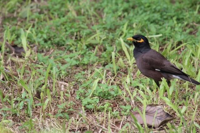 Birding in Coorg