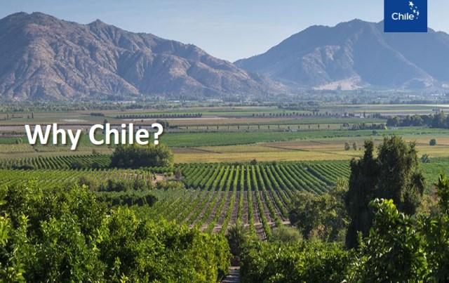 Travel to CHILE, Kiwifruits