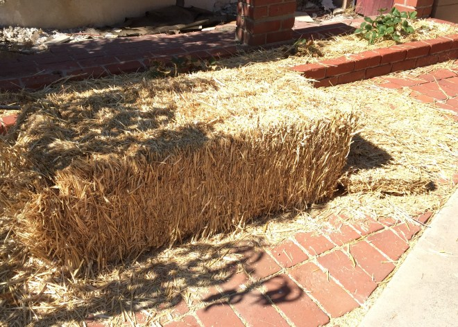 Straw Bale for Mulch (Never use hay bales as they may attract pests and have seeds which will sprout in your garden)