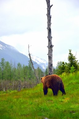 """Alaska Travel Essentials: How to practice bear safety and be """"Bear-Aware""""."""
