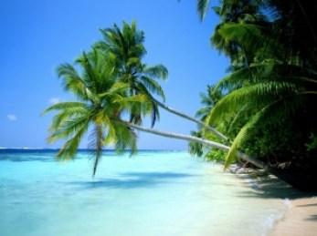playa-del-carmen-palmera
