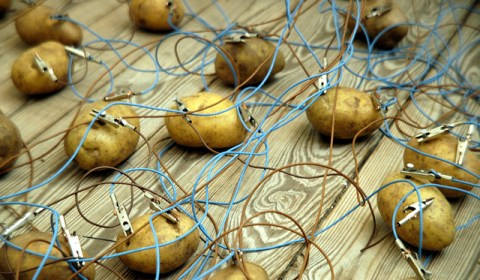 Potato Network