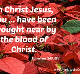 Poinsettias symbolize the blood of Christ
