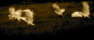Monday Meditations 008: True Freedom