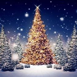 Jule Produkter