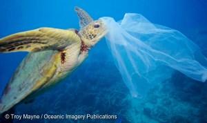 contaminacion-plasticos