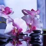 Che tu sia un massaggiatore e/o un estetista puoi aumentare le entrate economiche con il massaggio a mani e/o piedi con pietre calde