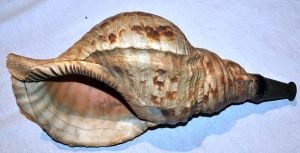 640px-Antique_Japanese_horagi_(conch_shell_trumpet)