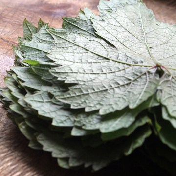 vine-leaves