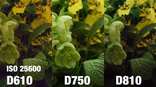 Medium Of Nikon D610 Vs D750