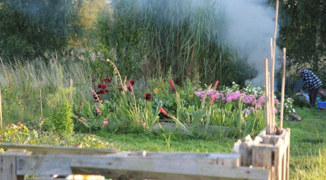 Maulden Allotments Summer August 2014