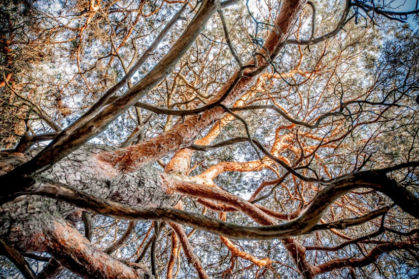 Your Brain On Tree