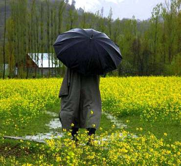Wet apple flowers and spring of Kokernag