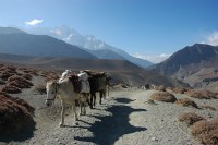 Donkeys helping out