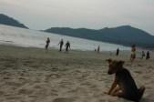 Cute dog enjoying sunset