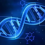 Anticorps anti-ADN natif. Test de Farr