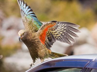 parrot-blog