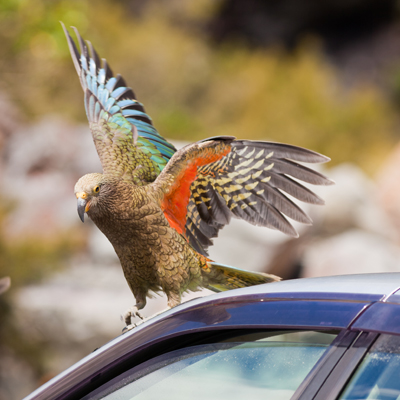 gps tracker parrots and other animals