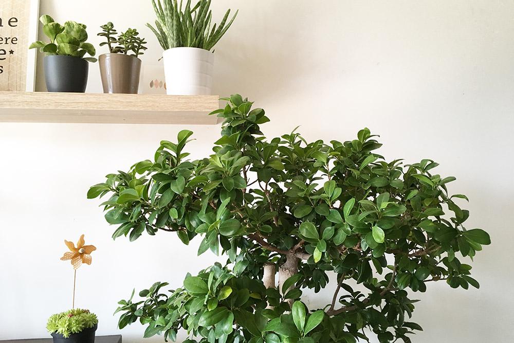 melopolitan-plantes-depolluantes-interieur-1