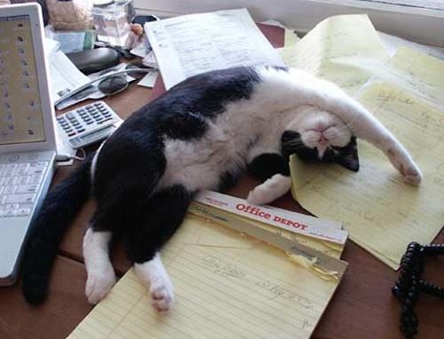 Cat yoga