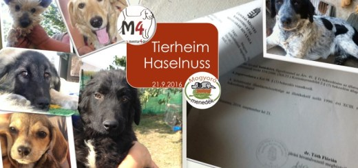 tierheim-haselnuss-21-9-2016
