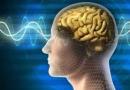 Beyninizde bir pusula mı gizli?