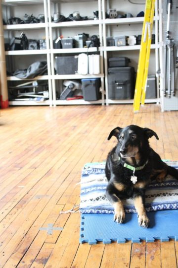 Laika: Studio dog, friend to all.