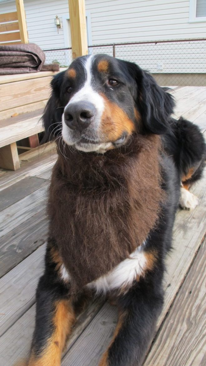 Furry dog bandana.