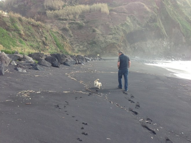 Puppy in the Azores.