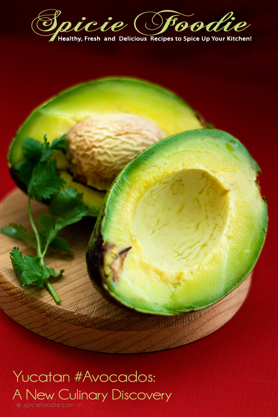 Yucatan Avocados | #avocados #yucatan #aguacate #Mexico