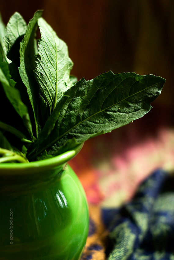Epazote Leaves and Recipe Ideas | #MexicanFood #epazote #herbs