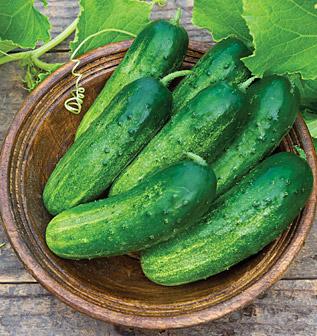Cucumbers(2)