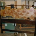 King headboard burl & walnut