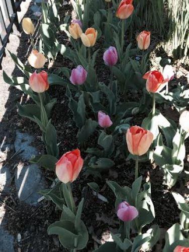 central park flowers4