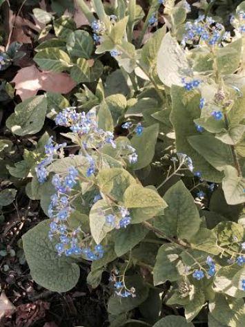 central park flowers6
