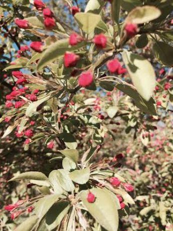 central park flowers7