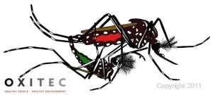 Oxitec mosquito