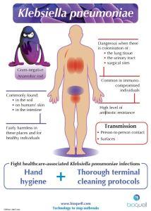 klebsiella bacteria pneumoniae