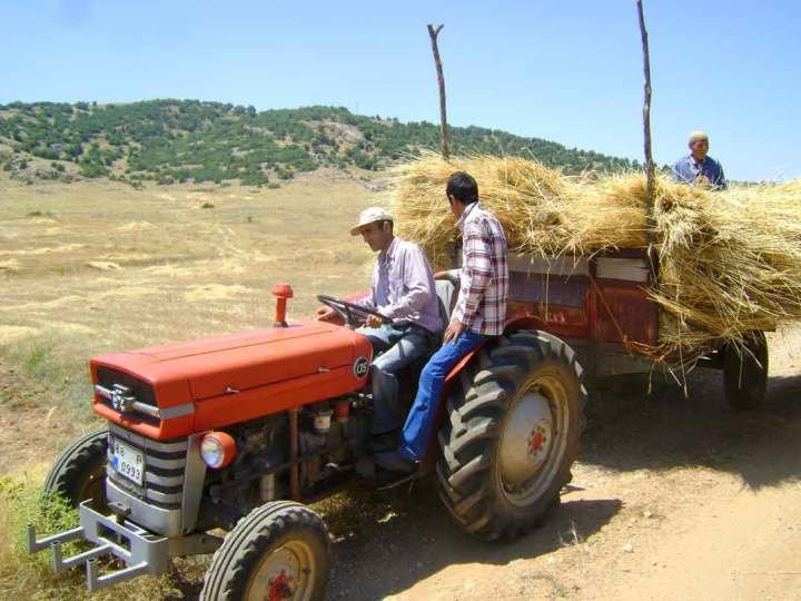 Turkish farmers on our lease