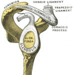 What Exactly Is a SLAP Lesion? Top 5 Things You Need to Know About a Superior Labral Tear